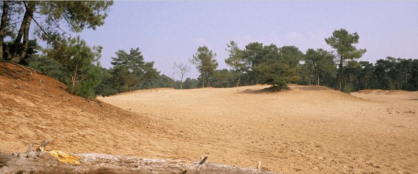 Korte Duinen